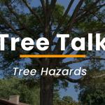 Tree Hazards