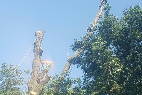 Tree Removal banner new