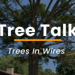 trees in wires