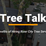 6 Benefits of Hiring a Residential Tree Service